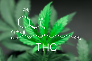 chemical compound of thc shown over a marijuana plant