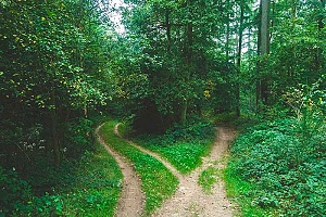 a fork in the road in a forest showing how 12 step recovery has different paths you can take